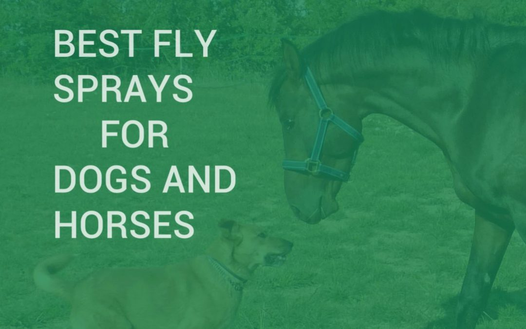 Best Fly Sprays for Dogs and Horses
