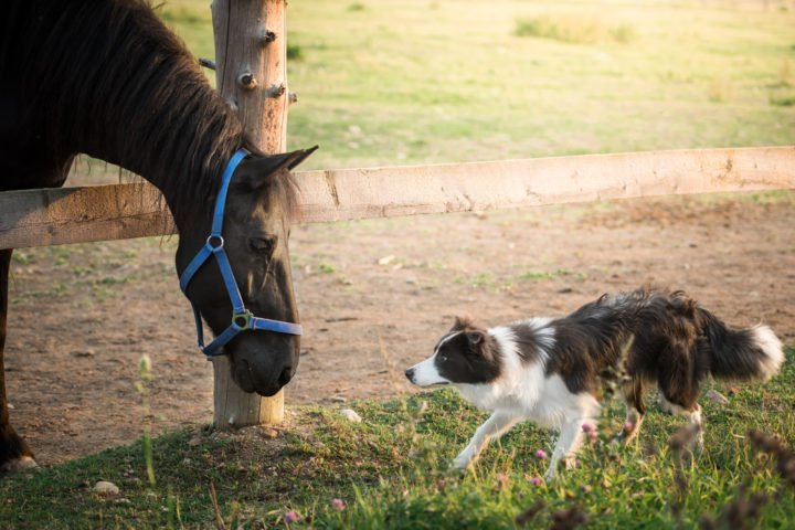 horse and a dog