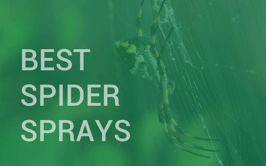 Best Spider Sprays