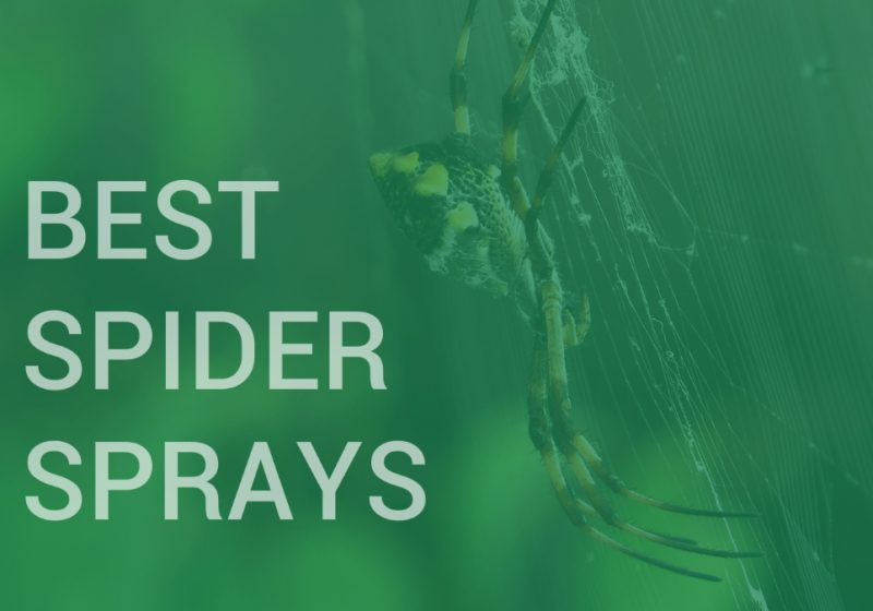 best spider killer and repellent sprays