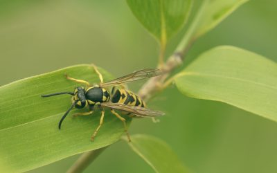 Keep Wasps Away with These Homemade Wasp Repellent Recipes