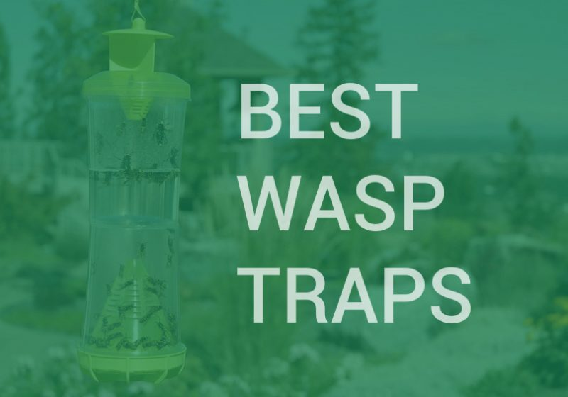 best wasp and yellow jacket traps
