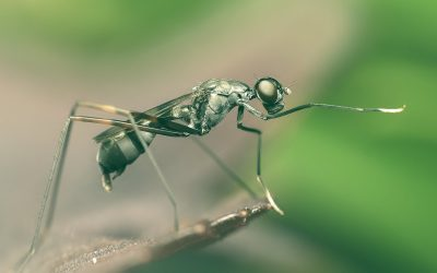 What Is Biological Pest Control?