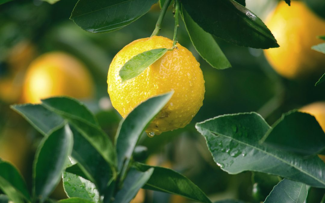 Citrus Fruit Might Provide Us With An Alternative Way To Fight Mosquitoes