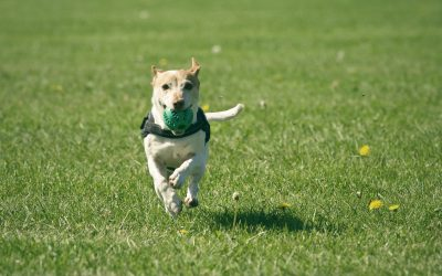 Pest Control Tips For Pet Owners