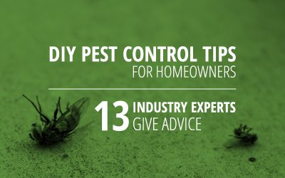 DIY Pest Control Tips for Homeowners: 13 Experts Weigh In