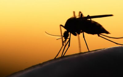 Keystone virus: the new mosquito virus