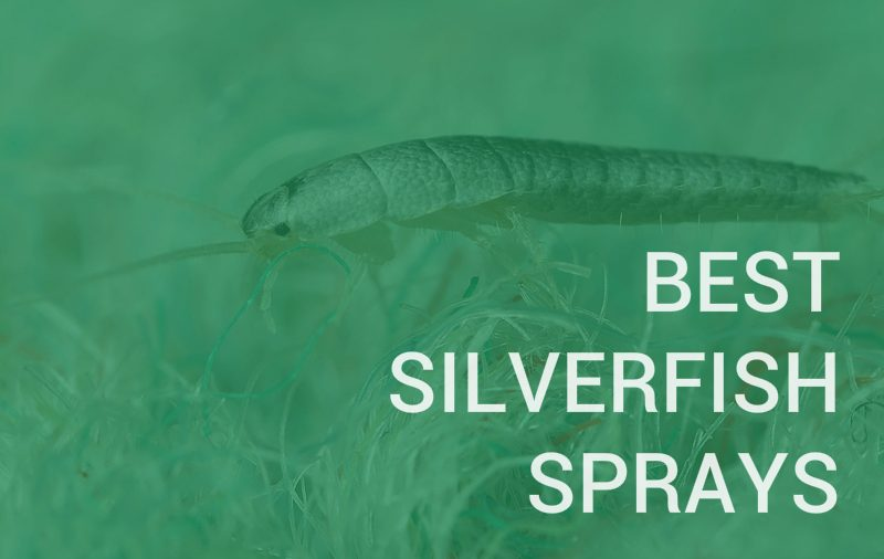 best spray for silverfish