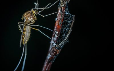 Why do mosquitoes exist?