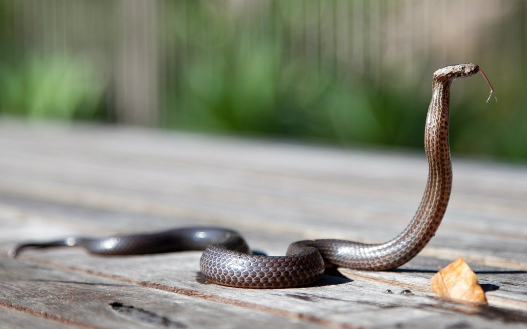 Can Mothballs Deter Snakes? Debunking the Misconception
