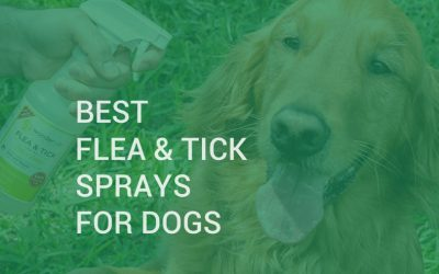 Best flea and tick sprays for dogs