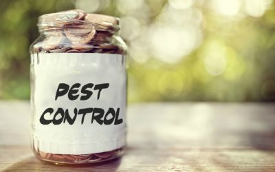 The Real Costs of Pest Infestation – How Much You Should Pay for Pest Control