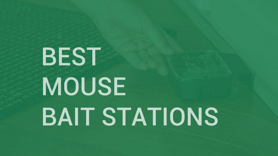 Best Mouse Bait Stations