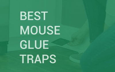 Best Mouse Glue Traps
