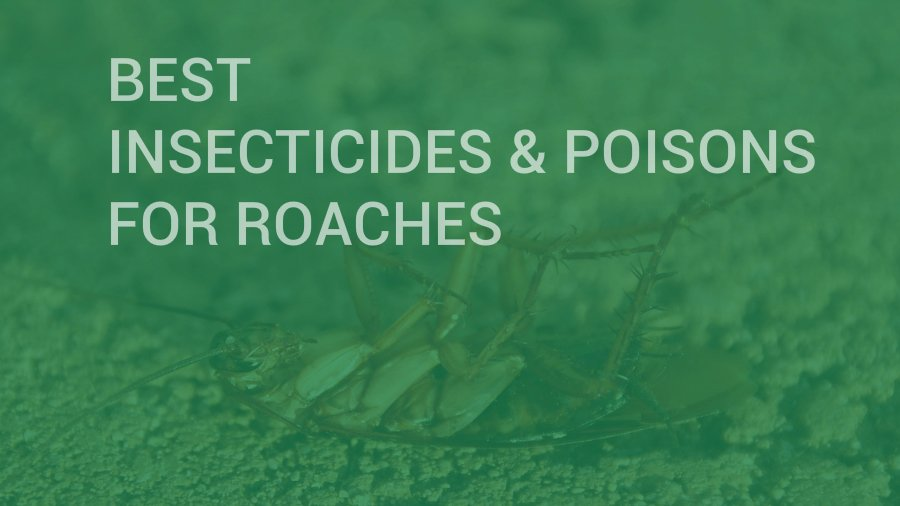 Best Poisons and Insecticides for Roaches