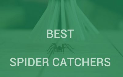 Best Spider Catchers