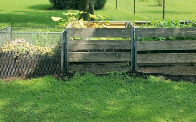 Composting with worms: pros, cons & how-tos