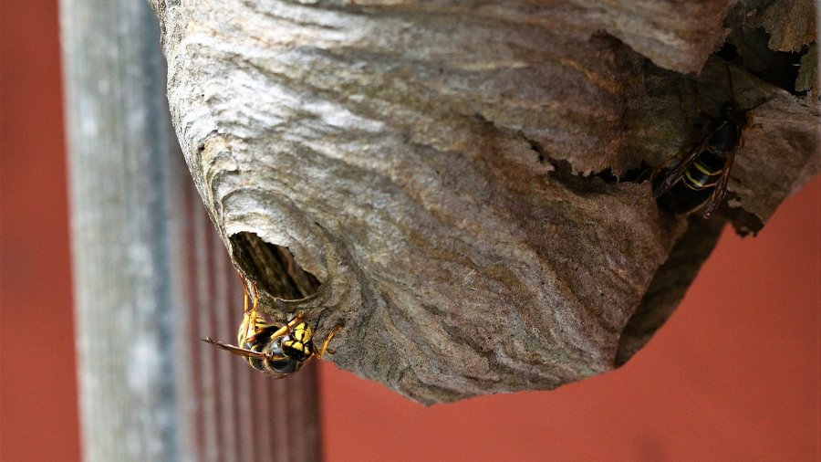 How My DIY Wasp Control Project Failed and What I Learned from It