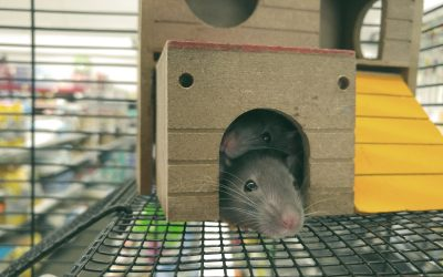 15 Interesting Facts about Rats