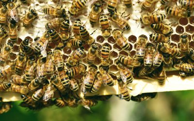 Stinging insect identification: wasps, bees, hornets and yellow jackets