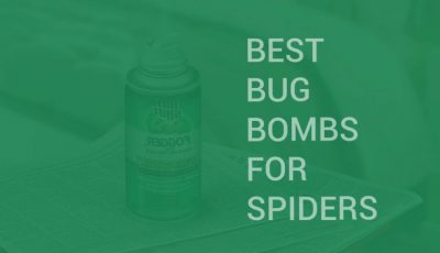 best bug bomb for spiders
