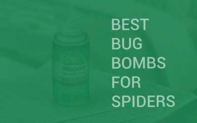 Best Bug Bombs for Spiders