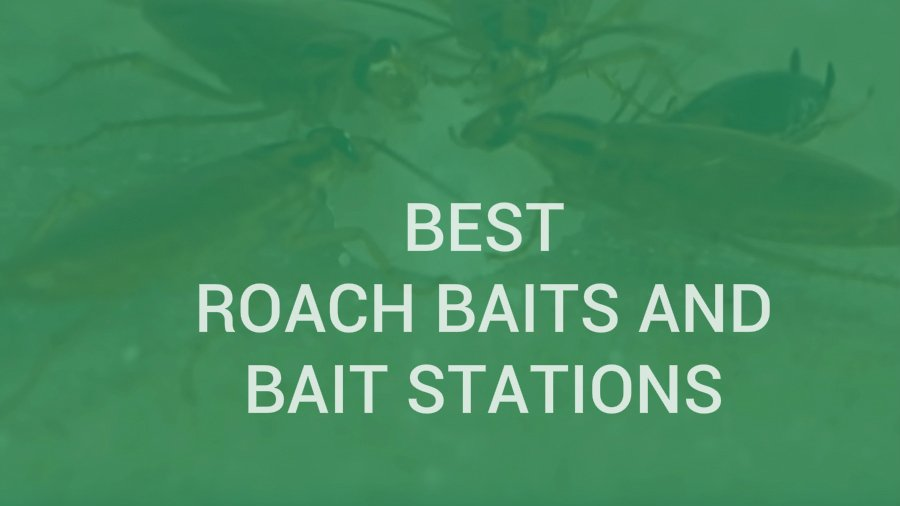 Best Roach Baits and Bait Stations