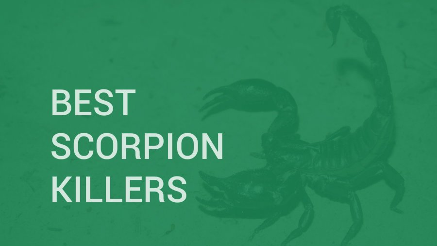 Best Scorpion Killers