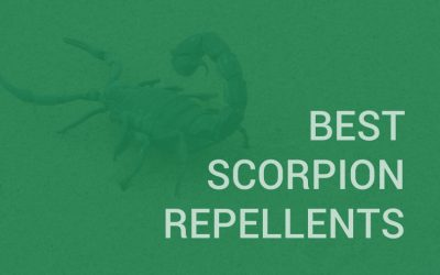 Best Scorpion Repellents