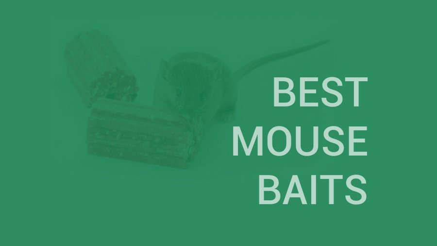 Best Mouse Baits