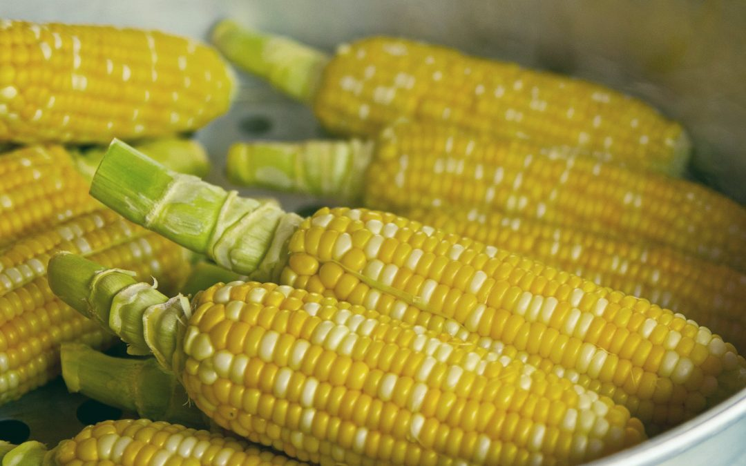 Guide to Corn Pests, Insects, and Bugs