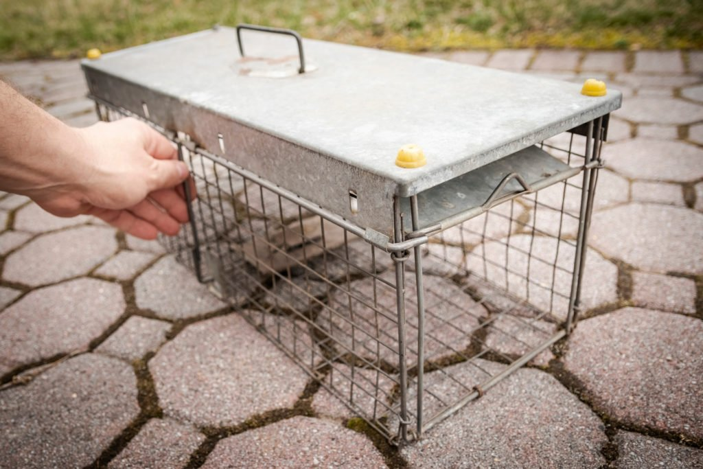 live trap for voles
