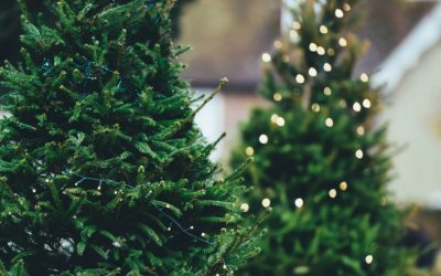 Most common Christmas tree bugs & how to get rid of them