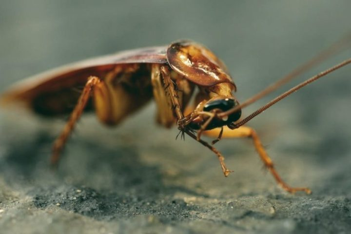What eats roaches