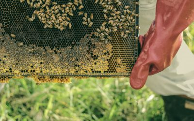 How to Keep Bees Away from Your House