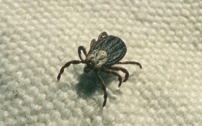 Most Common Tick-borne Diseases In Humans