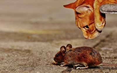 Do Cats Eat Mice? All About Mice Predators