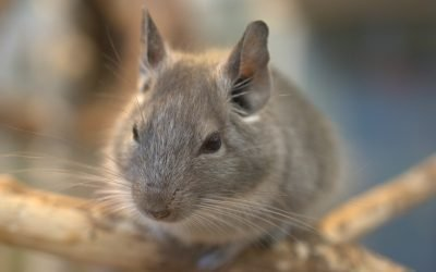 Hantavirus and Mice: Symptoms, Treatment, and Prevention