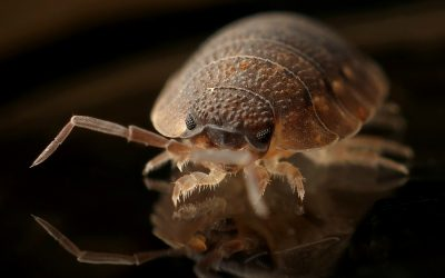 How Dangerous Bed bugs Actually Are?