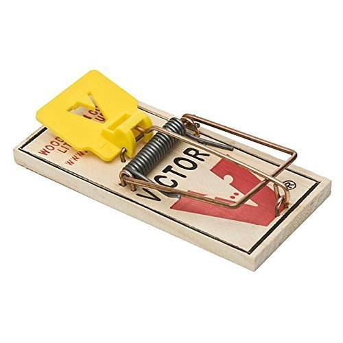 what to put on mouse traps