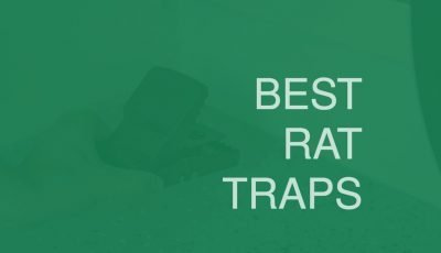 rat traps that work