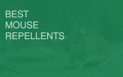 Best Mouse Repellents