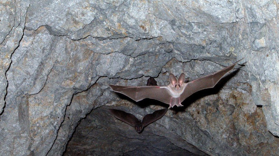 How to Safely Remove Bats from Your Attic