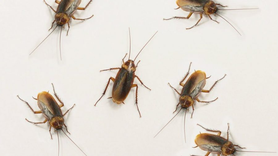 How Much Does a Roach Extermination Cost?