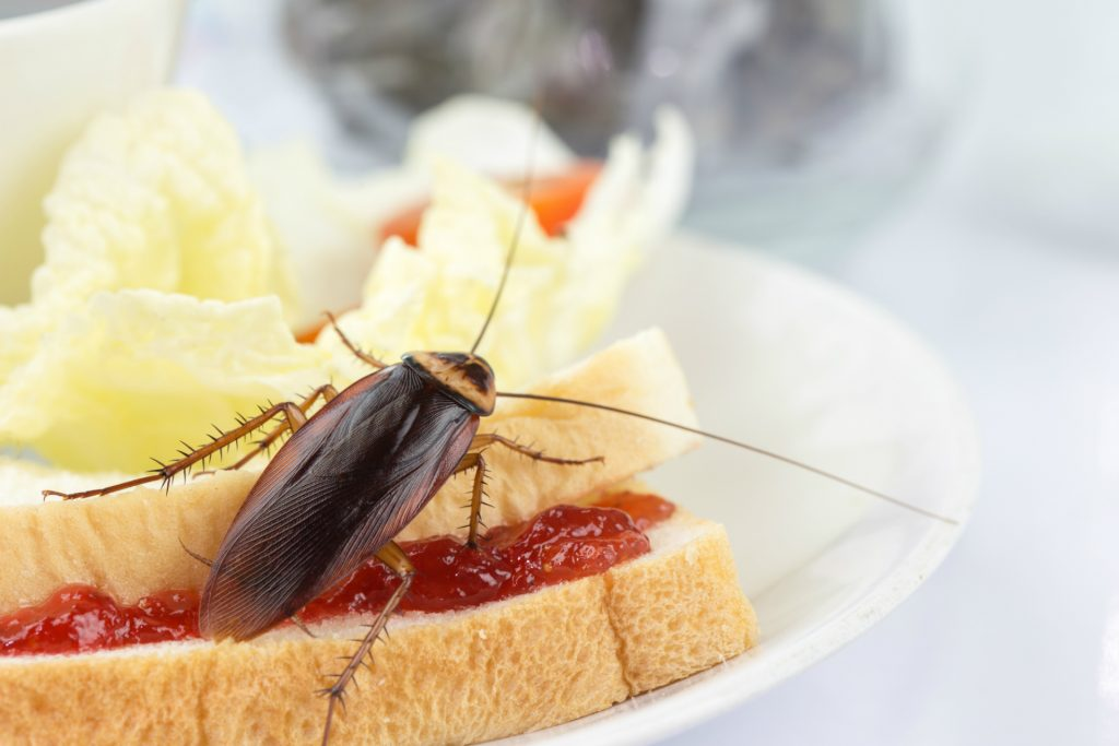Cockroach eating sandwich