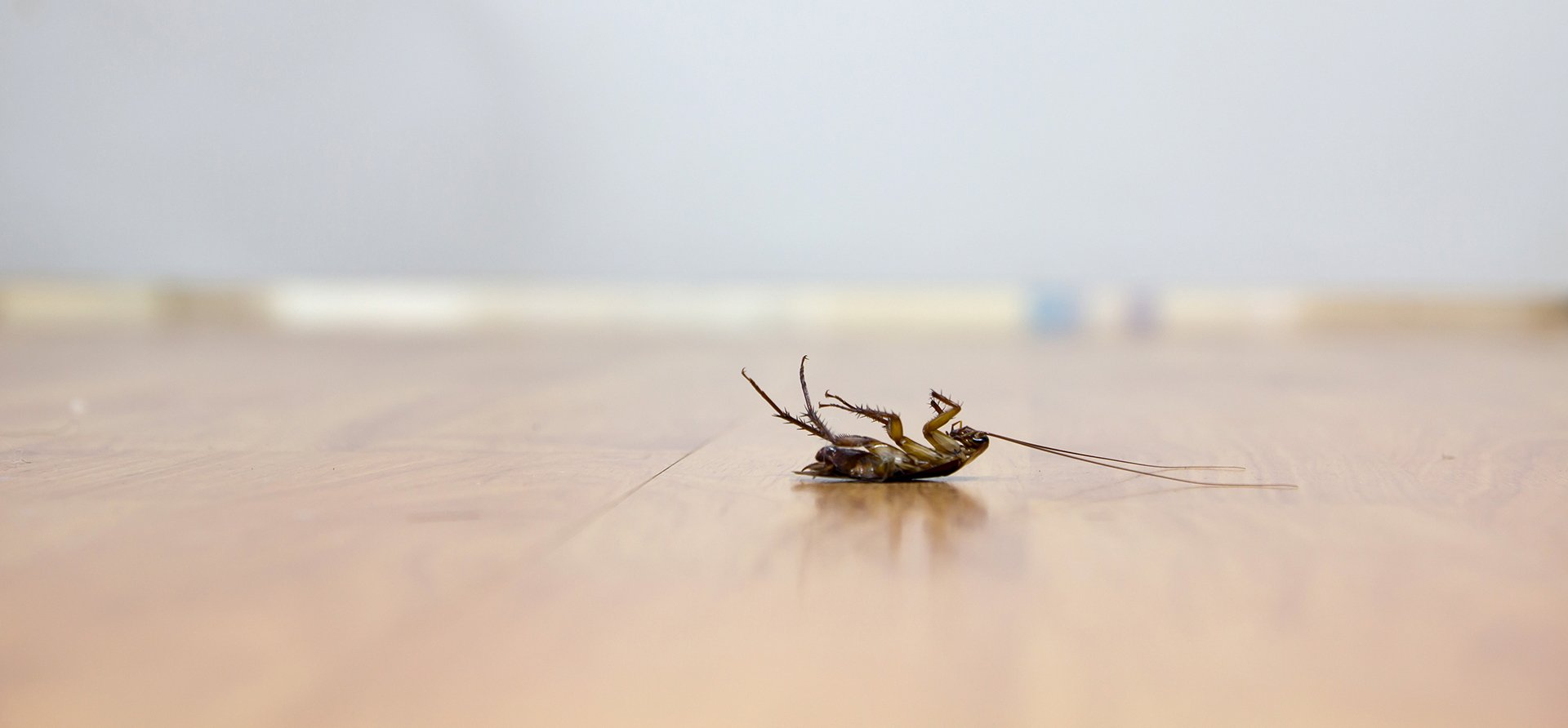 What to Expect After a Roach Exterminator Treatment   INSECT COP