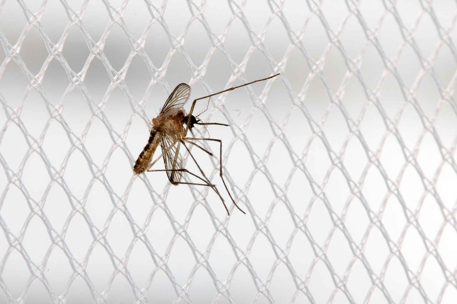 What to Do If There Is a Mosquito in My Room | INSECT COP