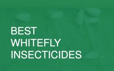 Best Whitefly Insecticides