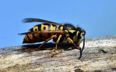 Purpose of Wasps: Why Do We Need Them?