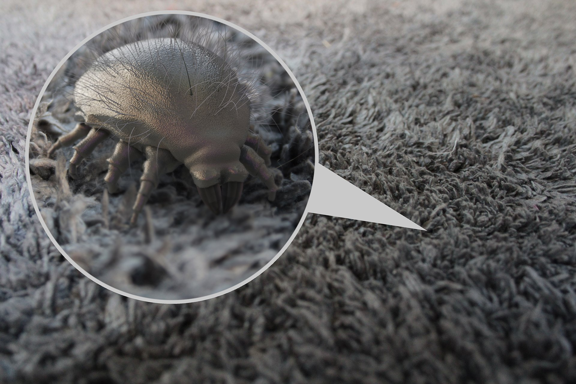 Where Do Dust Mites Come From? | INSECT COP